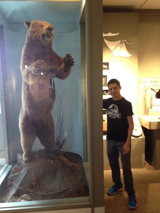 Big Bear Shot Killed Early - devinosaurus | ello