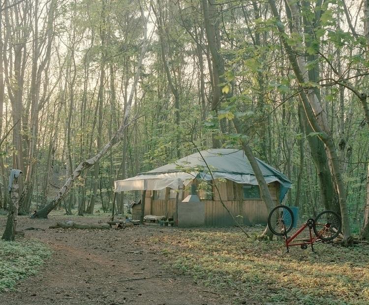 intimate portrayal woodland dwe - thisispaper | ello