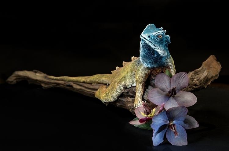 Blue lizard - bradverts | ello