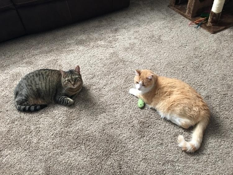 cats - fur balls finally starti - martymankins | ello