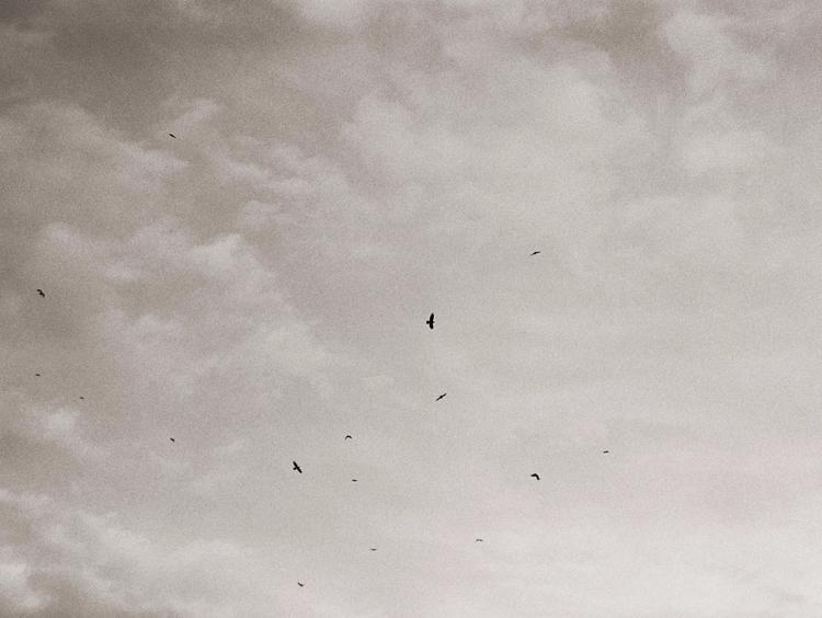 birds Praktica Mtl 5b Kodak TX  - alinele13 | ello