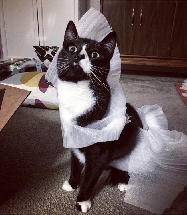 cats, fashionweek - hippiejoe | ello