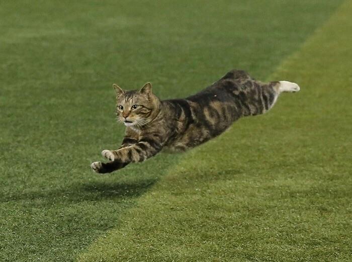 это картинка кот бежит на работу модель выбрать