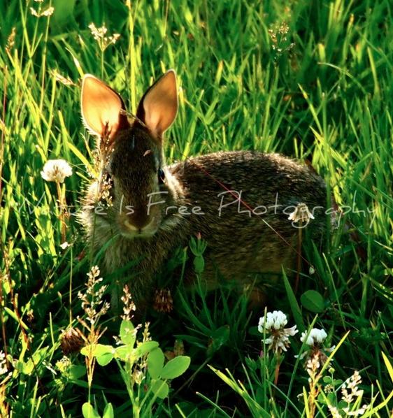 ~*HAPPY EASTER*~:rabbit::rabbit - natureisfree   ello