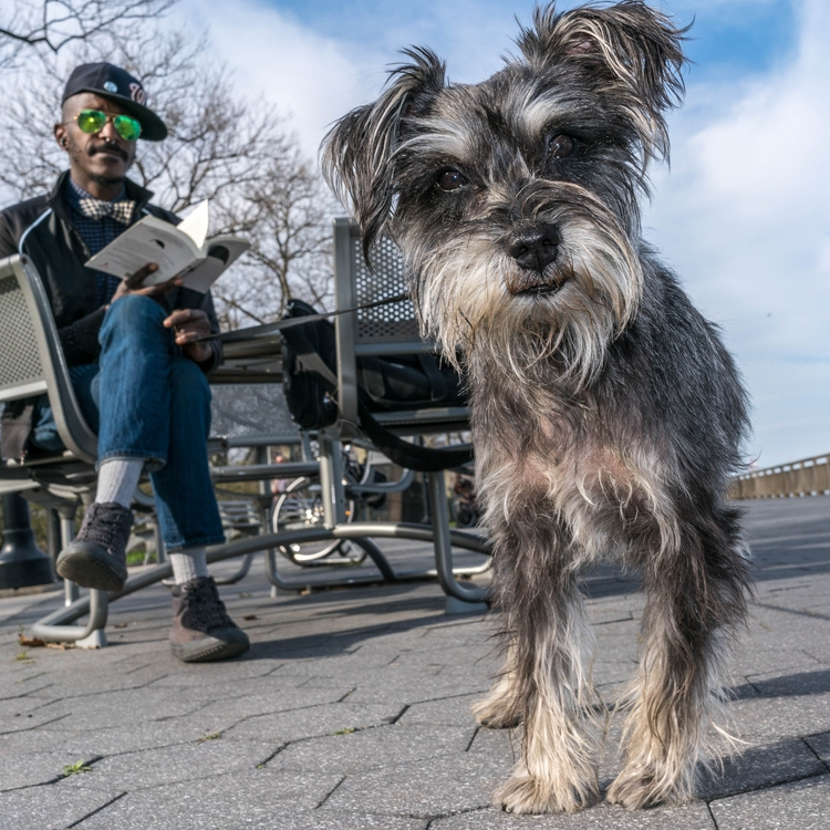 East Village Dog - phodographer | ello
