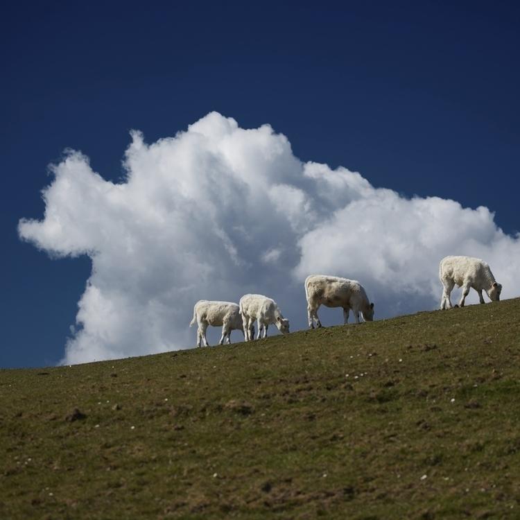 Cloudcows Cowcloud - germany, bavaria - schlichi | ello