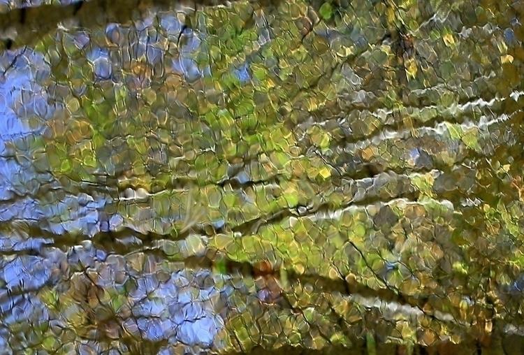 Reflection creek. October 2016 - vujadav17 | ello