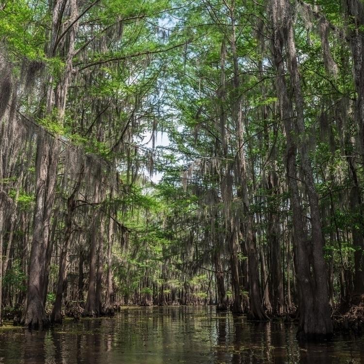 swamp, stuck muck - leica, leicaQ - devinpense | ello