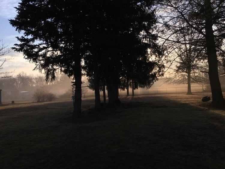 Cool Mornings - morning, sun, mist - thisvessel | ello