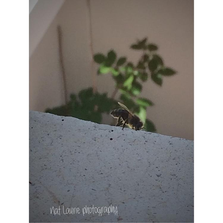 insects, windows, fly, morning - nataliasr81 | ello