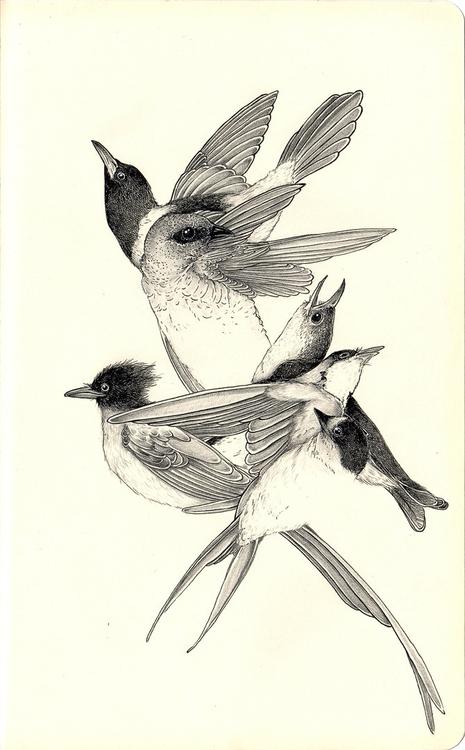 Pájaros Estudio de aves en Mole - andimacka | ello
