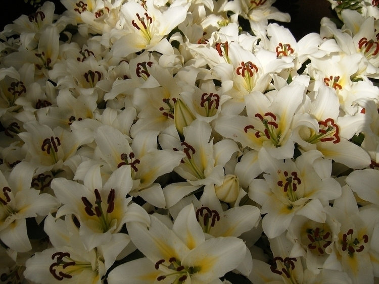 Cicekler, Flowers, Yolk - willmoller | ello