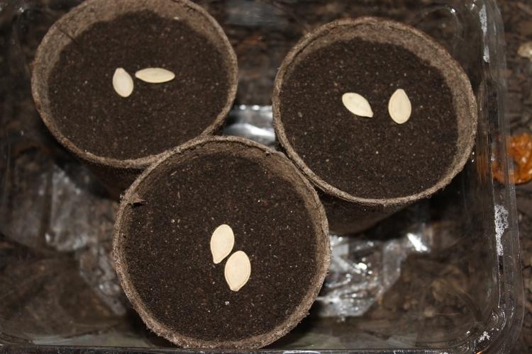 started planting zucchini pumpk - ejfern28 | ello