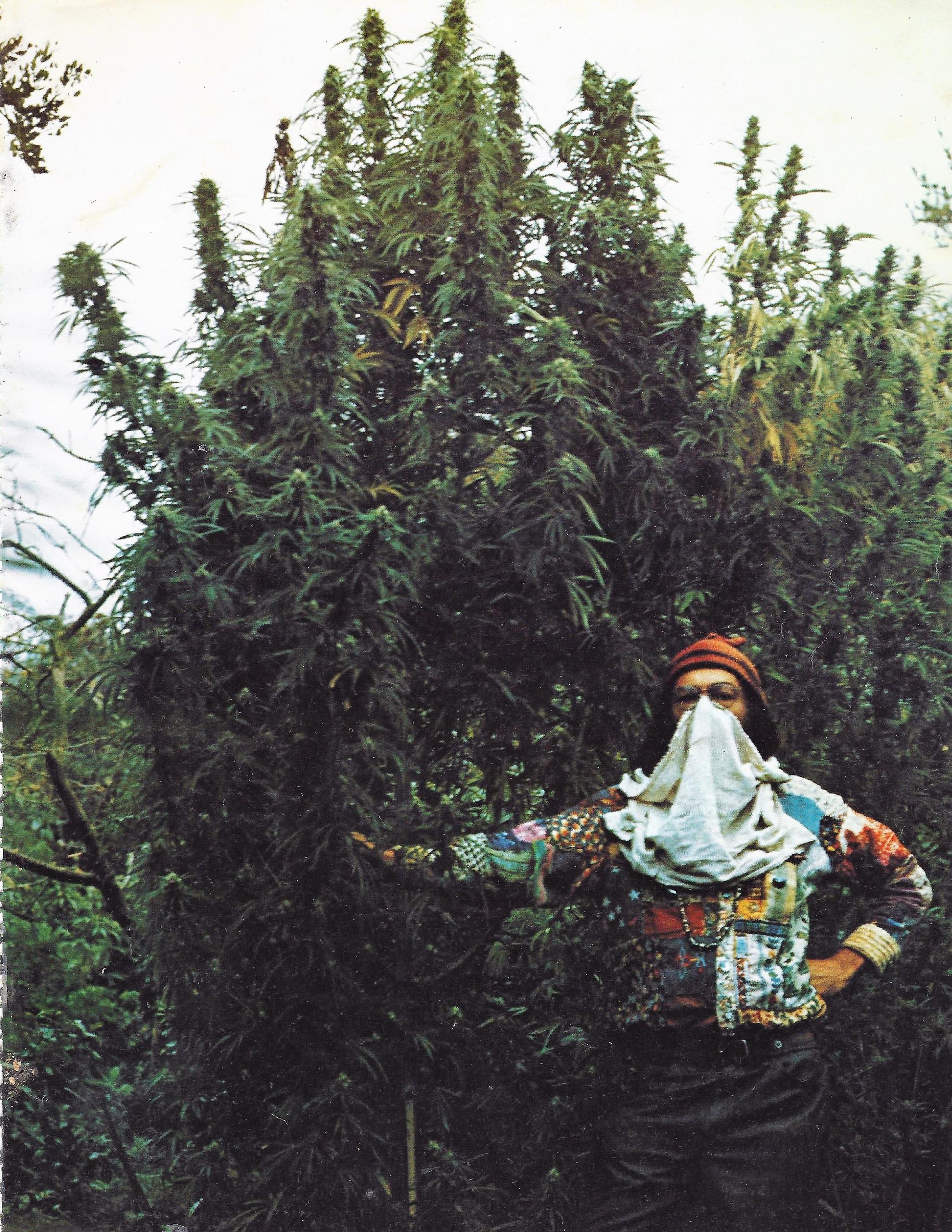 420 - ellocannabic, Hatun, marijuana - ellocannabis | ello