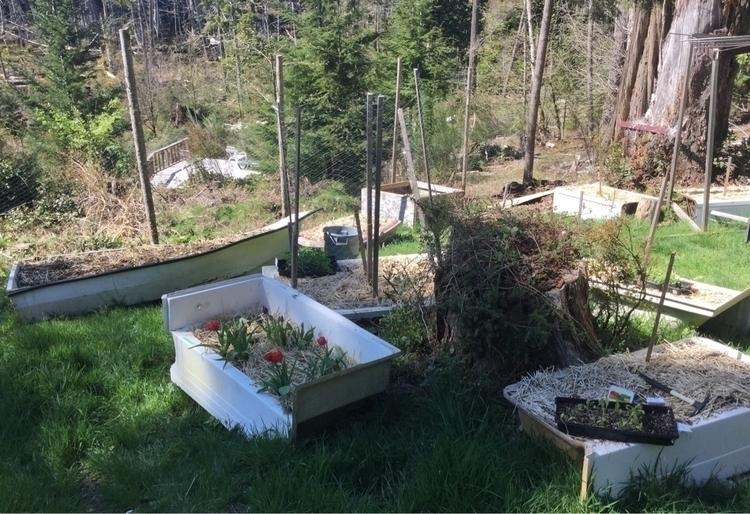 Stage 4 garden starts ready pla - laurabalducci | ello