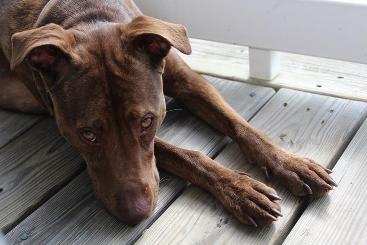 Brown - animals, dog, mutt, brown - gpinkney | ello
