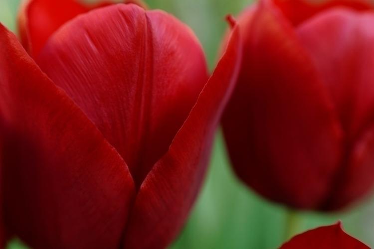 Epsilon Eridani - photography, flower - marcushammerschmitt | ello