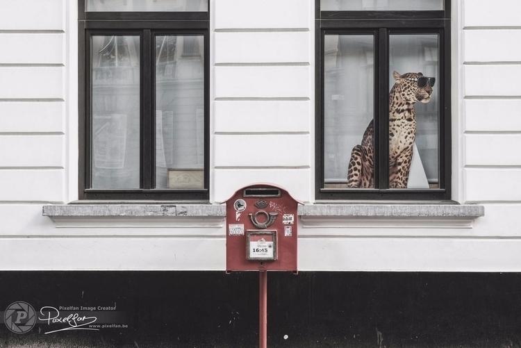 postman? ring - website  - bisje | ello