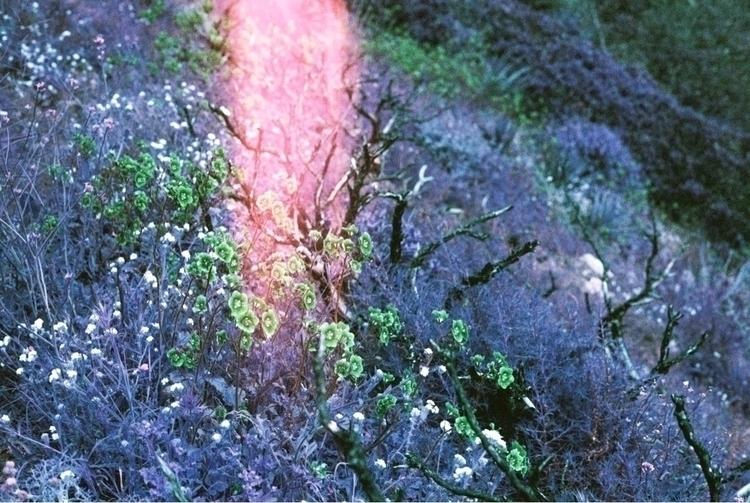 Rose gold - shootfilm, film, 35mm - brianne-siegel | ello