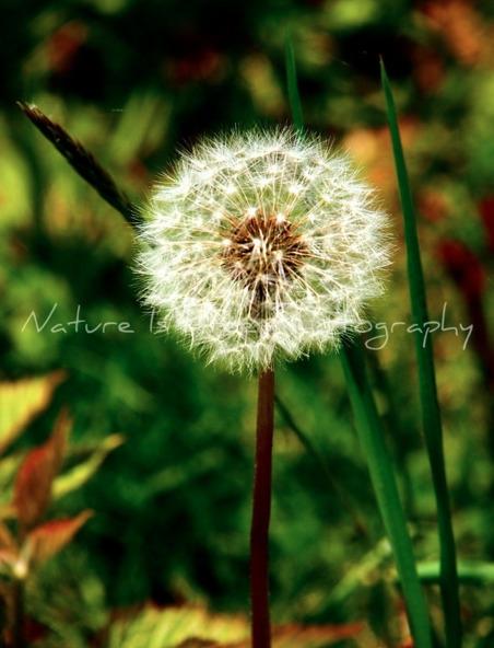 multitude small delights consti - natureisfree | ello