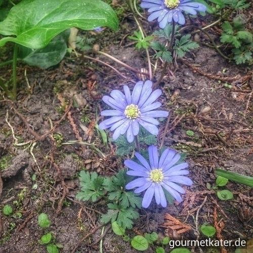 nature, gardening, flower, spring - gourmetkater | ello