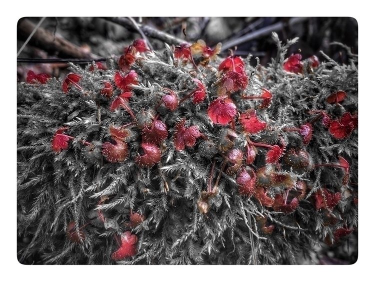 red moss spores - iphoneography_ry - retroyeti | ello