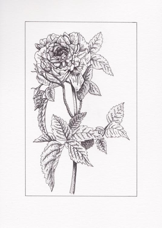 🥀Bittersweet:rose - joelseverne   ello