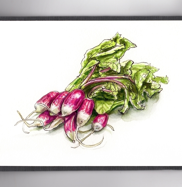 Radishes Paris - watercolor, watercolour - doodlewash | ello
