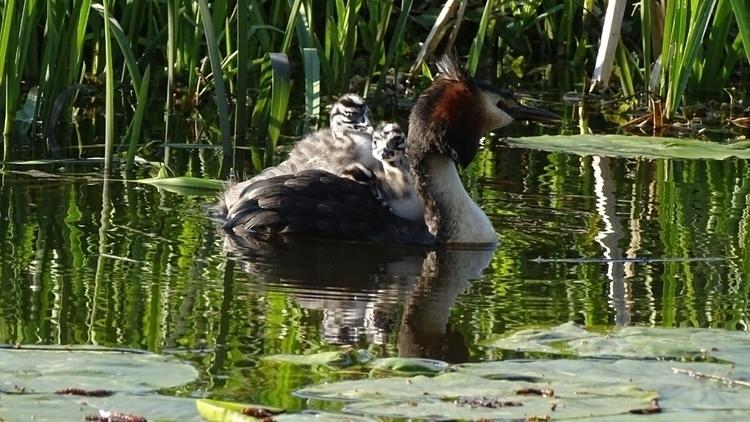 bird - naturephotography, avifauna - heinvanwersch | ello