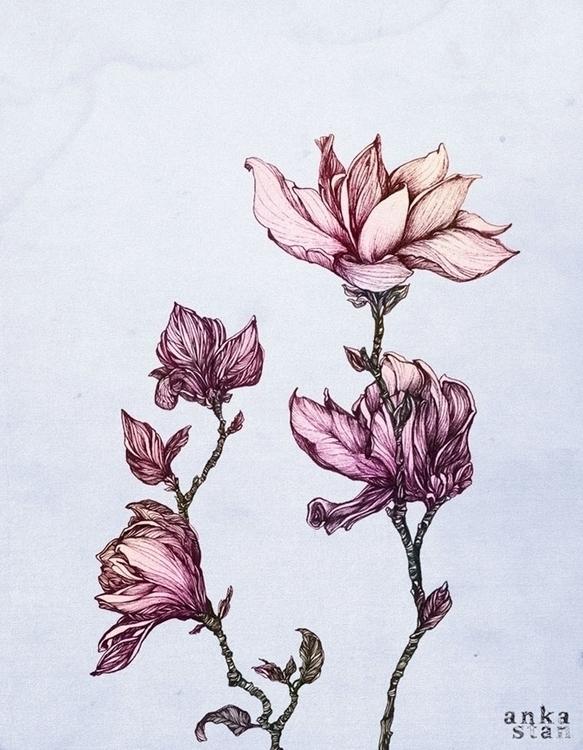 Magnolias - flowers, magnolia, botanicalart - ankastan | ello