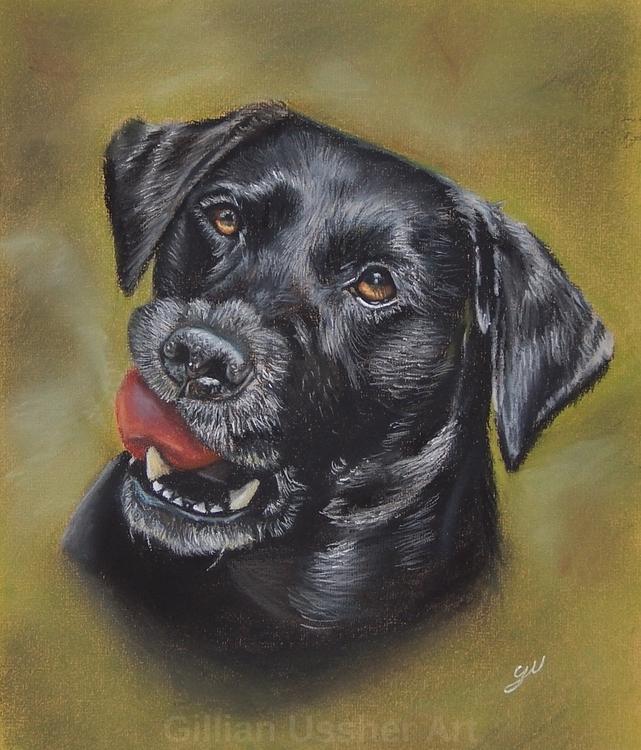 Black Labrador - gillianussher | ello