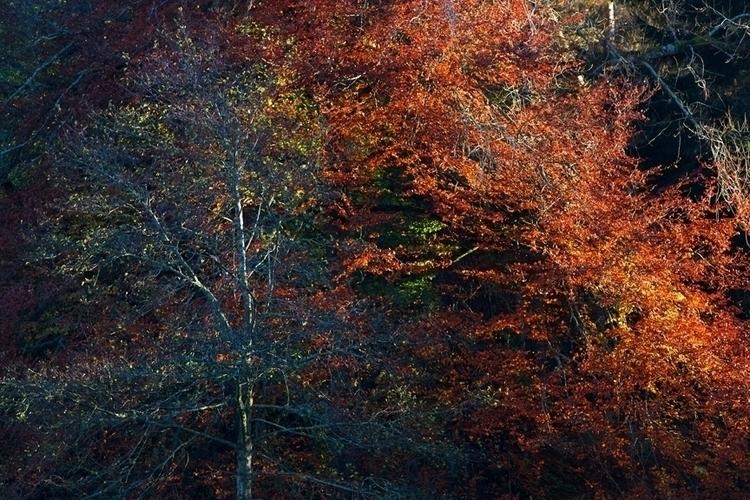 Rustic Slash - autumn, trees, photography - grahamriddell | ello