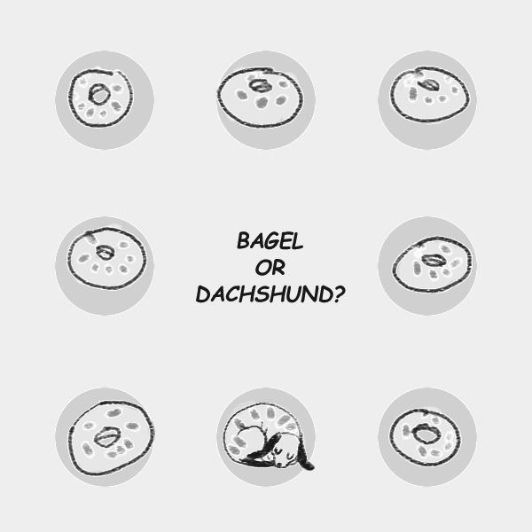 bagel dachshund - illustration, painting - soso-6104 | ello