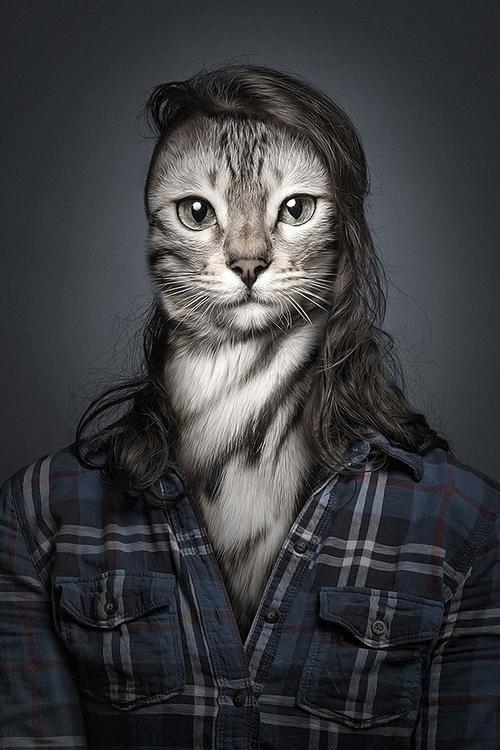 Undercats - undercats, cats - sebastianmagnani   ello