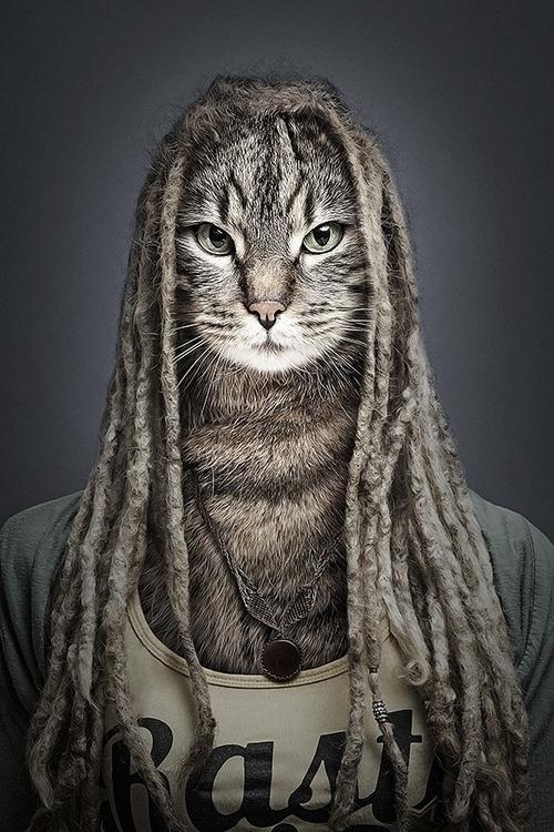 Undercats - undercats, cats - sebastianmagnani | ello