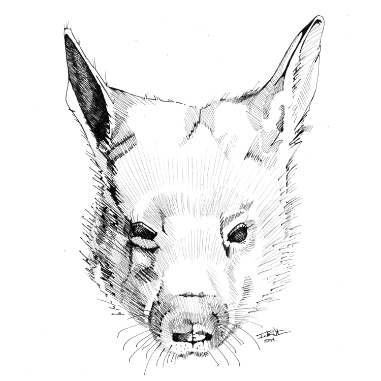 Wombat - illustration, drawing - ianwithers | ello