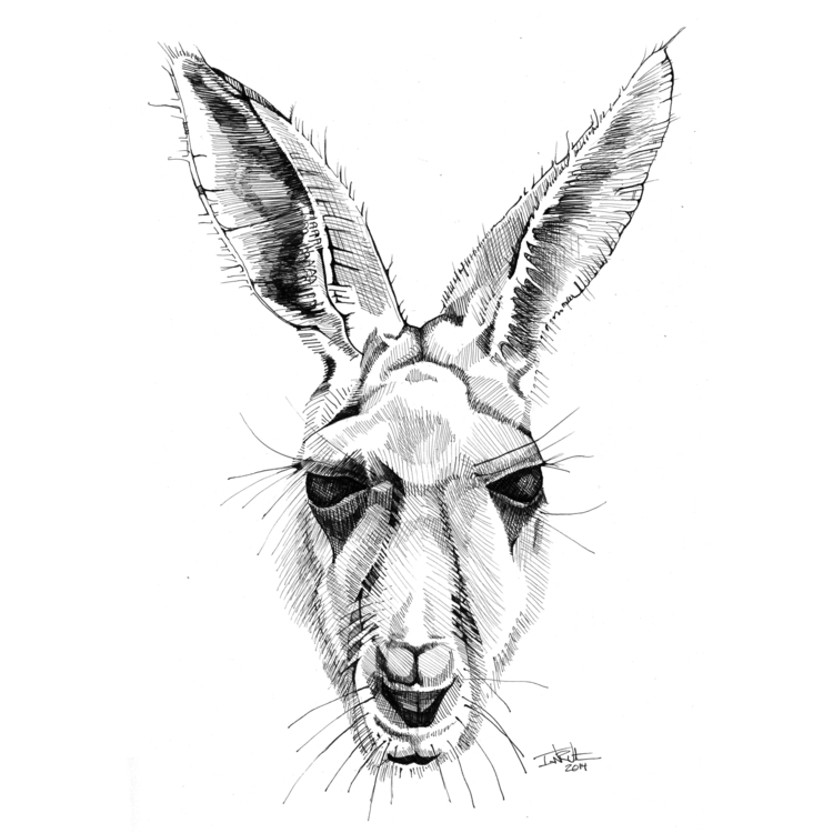 Kangaroo - illustration, drawing - ianwithers | ello