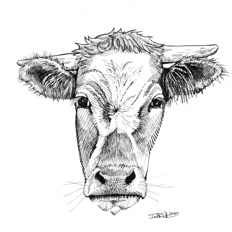 Brown Cow - illustration, drawing - ianwithers | ello