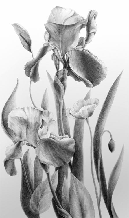 drawing, pencildrawing, lifedrawing - danteed | ello