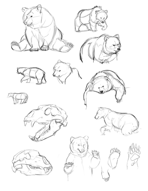 Bear studies - carriehankins | ello