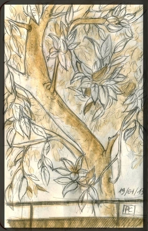 Magnolia tree - sketch, sketchbook - cristinaporcelli | ello