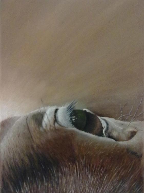 Horse eye landscape - horse, horses - patrickvandeput | ello