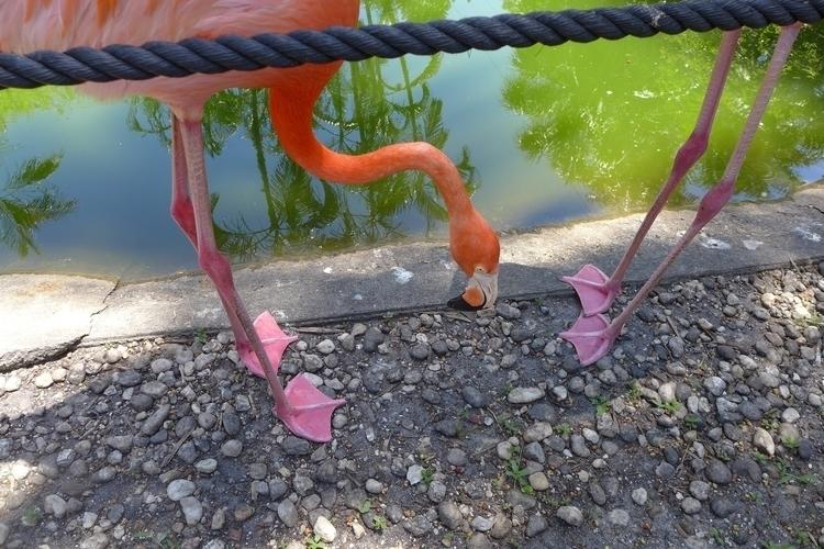 Pink feet - photography - dalespiry | ello