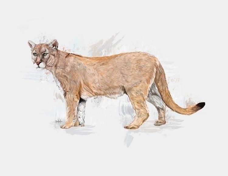 puma, illustration, animal, art - ricardomacia | ello