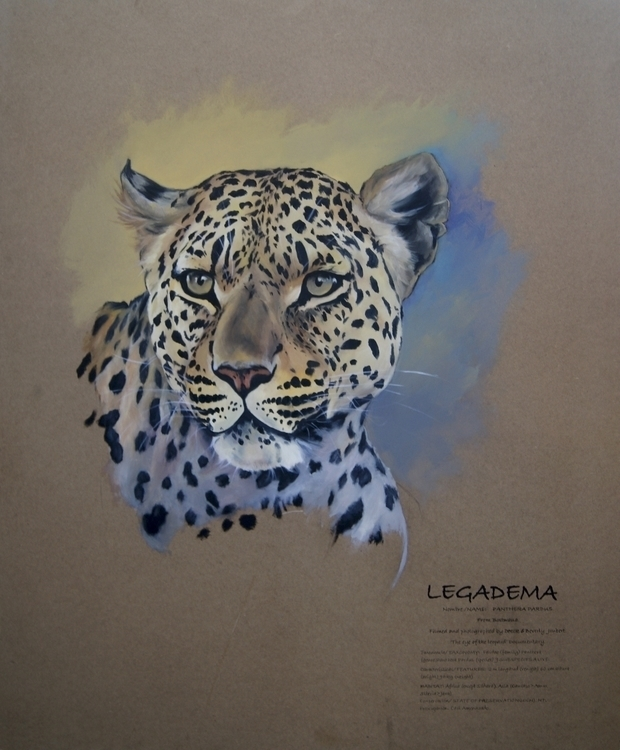 Legadema. Female cheetah - illustration - isabelbarbaart | ello