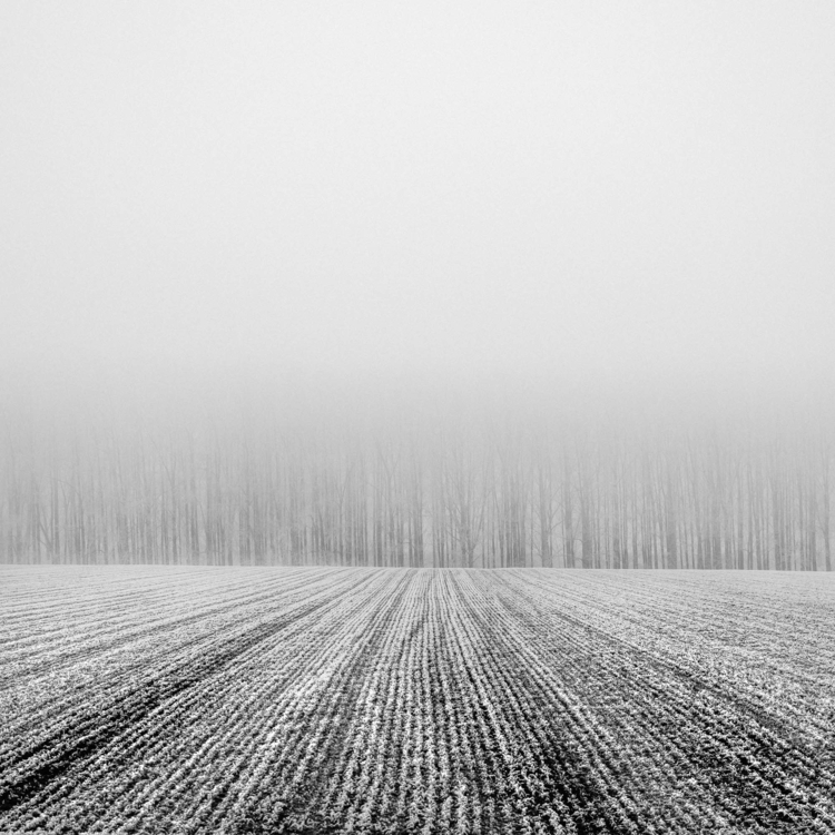 name_5 - photography, fog, frost - deckard-1398 | ello
