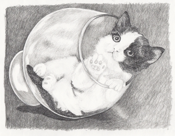 Kitten Glass - drawing - brandyhouse | ello