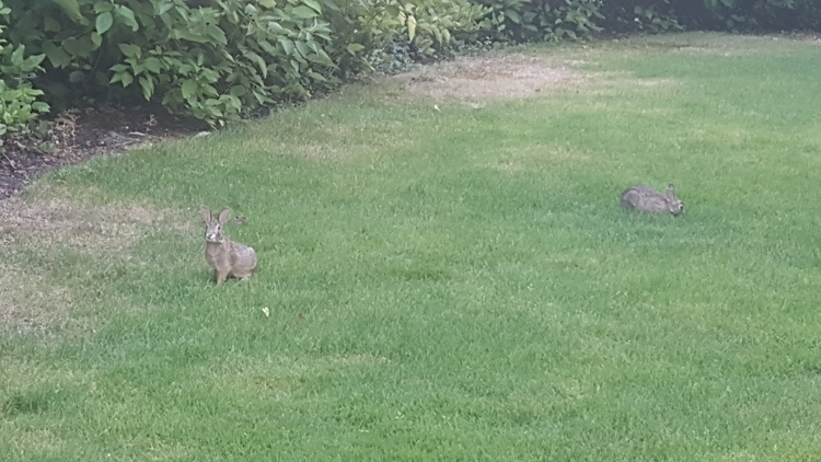 Autumn rabbits grazing Redmond - littleduffer20 | ello