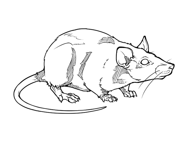 Rat Tattoo commemorating death  - celestialartistry | ello
