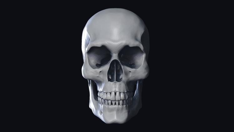 Skull Anatomy Study - Sculpted  - kurtthomas1994 | ello